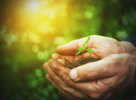 replant: young sprout plants in old dirty hands, concept on green background