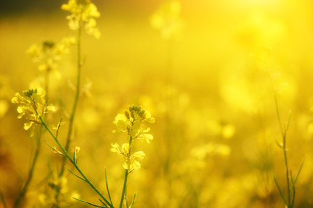 Le fond floral naturel, jaune des fleurs sauvages Banque d'images - 41794774