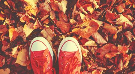 caminar: Zapatos zapatos rojos en las hojas de otoño
