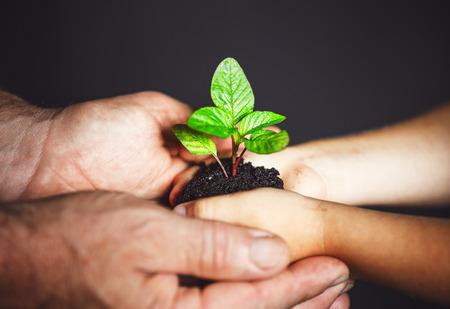 generace a koncepce rozvoje. Starší muž a dítě se drží za ruce zelené rostliny rašit