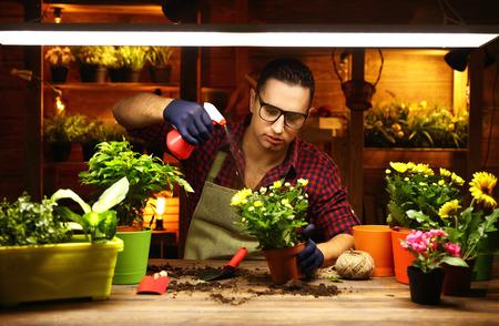 Happy man gardener transplants and watering flowers in greenhouse