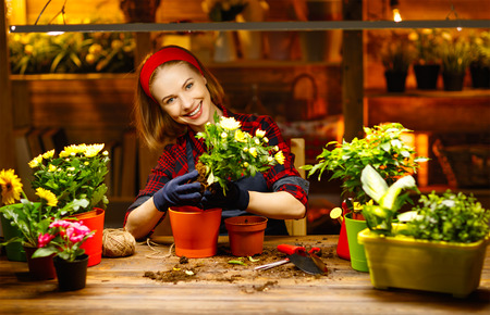domestic: Happy woman gardener transplants and watering flowers in greenhouse