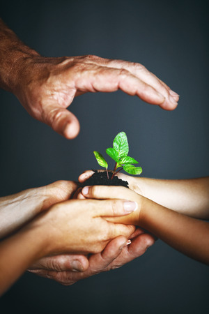 freedom: concept of family generations and cares. Hands of mother, father and child hold a green plant Stock Photo