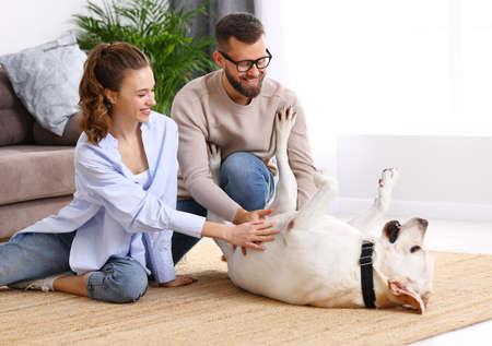 Happy young man and woman sitting on floor and playing with adorable dog while spending free time together at home 版權商用圖片