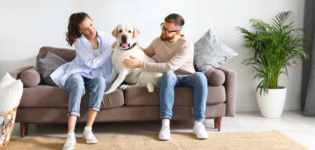 Cheerful young man and woman sitting on sofa and hugging adorable Labrador retriever dog while enjoying free time together at home