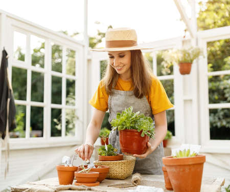 Happy female gardener smiling and taking care of potted plants in light orangery on summer day in garden Stock Photo