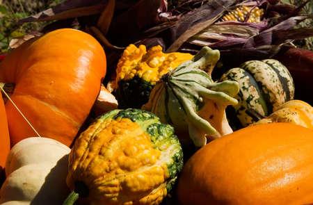 Get your Halloween pumpkin at a pumpkin patch photo