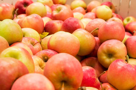 Pile of colorful organic apples during harvest time. Shallow depth of field. Stok Fotoğraf