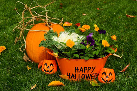 Happy Halloween flower basket and pumpkin on grass with leaves photo