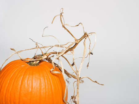 Pumpkin on paper is ready for decoration photo