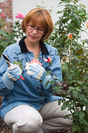 Woman is having good time with her hobby by cutting roses in her garden