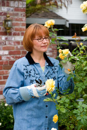 frontyard: Women is having good time with her hobby by cutting roses in her frontyard
