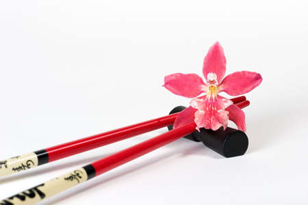 Beautiful magenta orchid on chopstick over white paper background with copyspace photo