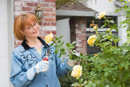 Women is having good time with her hobby by cutting roses in her garden