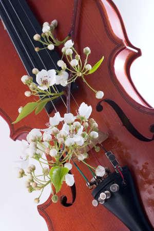 Spring twig of blooming flowers over old violin