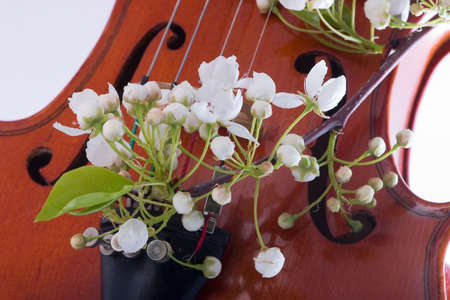 Closeup of spring twig of blooming flowers over old violin