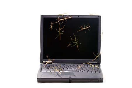 Laptop waarop stick bugs over toetsenbord en scherm geschikt voor elke computer bescherming thema Stockfoto