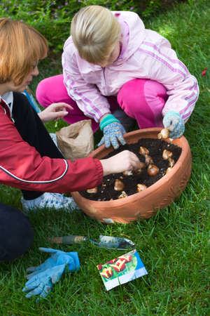 bulbous: Family time outside in the garden by planting spring bulbs together into container during autumn Stock Photo