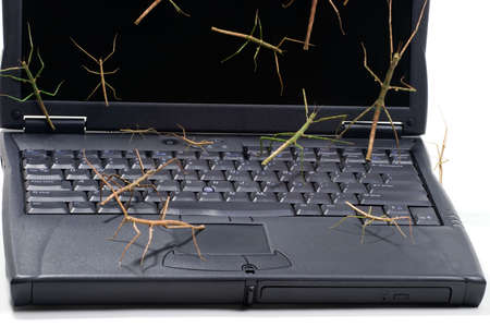 personal data privacy issues: Laptop covered by stick bugs over keyboard and screen suited for any computer protection theme