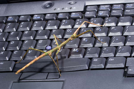 personal data privacy issues: Closeup of stick bugs on laptop keyboard suited for any computer protection topic Stock Photo