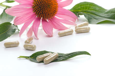 Closeup of Echinacea extract pills and fresh Echinacea flower leaves best suited for alternative medicine ads. Shallow DOF.
