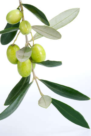 Closeup of green olives branch over white background Фото со стока