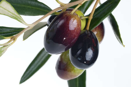 Closeup of black and green olives branch over white background Stock Photo - 6001217