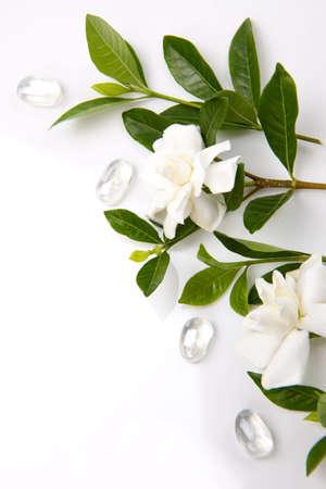 gardenia: Closeup of gardenia flowers with glass pebbles over white background
