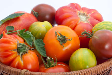 Full basket of homegrown organic heirloom tomatoes during harvest time. Foto de archivo