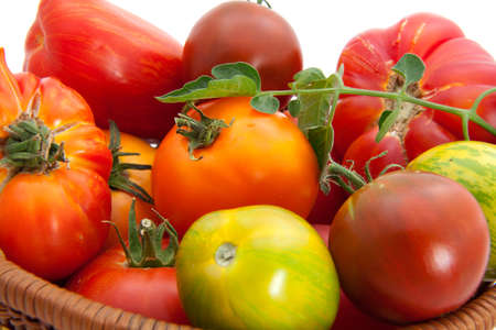 homegrown: Full basket of homegrown organic heirloom tomatoes during harvest time.
