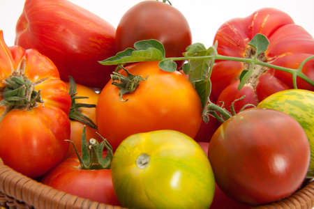 Full basket of homegrown organic heirloom tomatoes during harvest time. Stock Photo