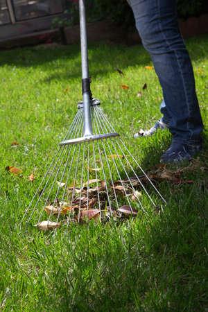 Woman is raking leaves on lawn in her back yard photo