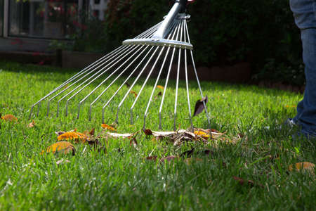 yard work: Woman is raking leaves on lawn in her back yard Stock Photo