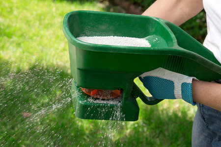 fertilizing: Manual fertilizing of the lawn in back yard in spring time  Stock Photo