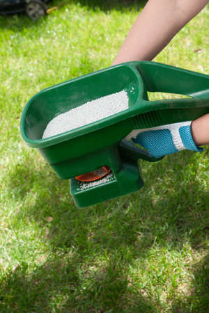 Manual fertilizing of the lawn in back yard in spring time photo