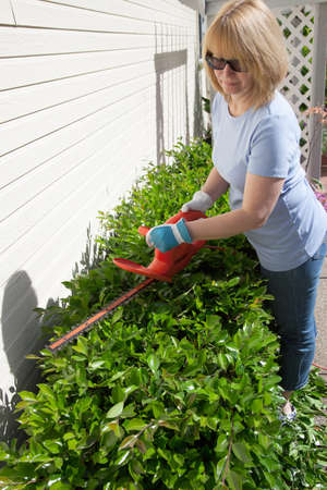 bush trimming: Woman trimming bushes in her backyard using an electrical hedge trimmer  Stock Photo