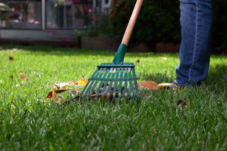 rake: Woman is raking leaves on lawn in her back yard Stock Photo