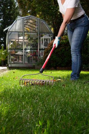 frontyard: Woman is raking leaves on lawn in her back yard Stock Photo