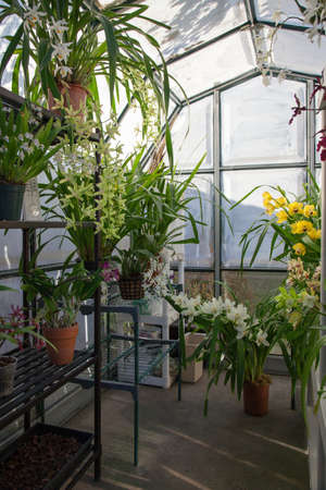 owned: Hobbist owned backyard garden greenhouse with blooming orchids plants