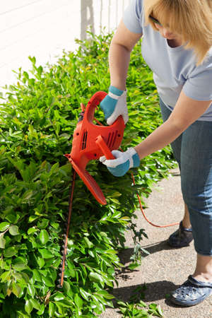 Woman trimming bushes in her backyard using an electrical hedge trimmer  photo