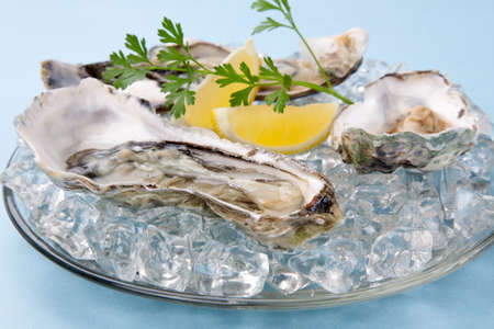 Closeup of open fresh oysters on ice garnished with lemon, and parsley over light blue background