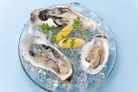 Closeup of open fresh oysters on ice garnished with lemon, and parsley over light blue background  photo