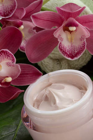 liniment: Dark pink blooming Cymbidium orchid flowers and moisturizing face cream for everyday.