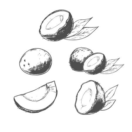 nutty: hand drawn coconut set, simple illustration, tropical food, for your design Illustration