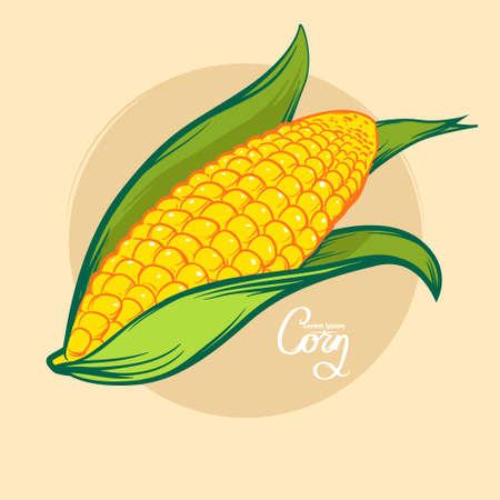 lithograph: corn, colorfull, for menu, simple illustration