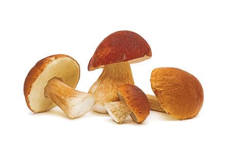mushrooms closeup on white background