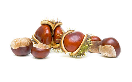 Chestnuts with seed pods over white photo
