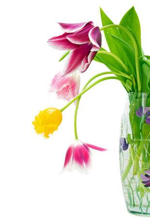 bouquet of tulips Stock Photo - 10669804