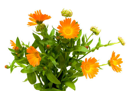 bouquet of flowers of calendula closeup on white background Stock Photo - 10732114