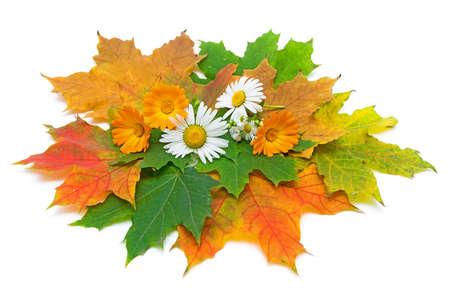 Autumn Still Life. Maple leaves, flowers of calendula and chamomile.